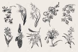 Exotic Orchid Set Botanical Vector Vintage Illustration Design