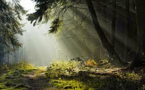 Forests Forest Shadow Light Nature Outdoors Trees Green Desktop