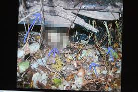 The jury at the casey anthony trial at the orange county courthouse on thursday observed a series of photos taken at the crime scene where the remains of caylee anthony were. Pictures Caylee Anthony Crime Scene Photos Warning Graphic Images Baltimore Sun
