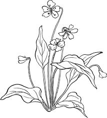 花のイラストフリー素材白黒モノクロno049白黒手書き風茎葉