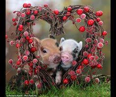 cute animal valentines day wallpaper. Perfect Valentines Guiness Record Worldu0027s Smallest  Animals HD Wallpapers  Picture  Background Photos On Cute Animal Valentines Day Wallpaper E