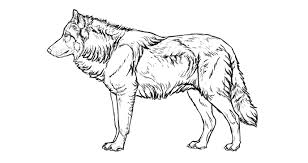 wolf drawing. Fine Drawing Howtodrawwolvesfursimplified Throughout Wolf Drawing