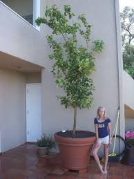 10 Best Desert Trees Images On Pinterest  Desert Trees Fruit Tree Sale Houston