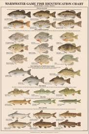 Warmwater Game Fish Identification Poster Fish Chart