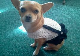 Free Crochet Dog Sweater Patterns Stunning Crochet Dog Sweater Patterns You Your Pup Will Love