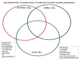 Comparing Plant And Animal Cells Venn Diagram Answers Bacteria Animal And Plant Cell Venn Diagram Magdalene