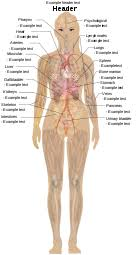 The organs of the human body are collections of tissues that perform a specific function in the system. Human Body Diagrams Wikimedia Commons