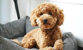 Dog Age In Human Years Chart How To Calculate The True Age Of Your Dog In Human Years