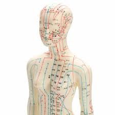 Female Organ Chart Us 31 09 30 Off Human Body Acupuncture Model Female Meridians Model Chart Book Base 48cm In Medical Science From Office School Supplies On