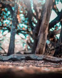 tree snapseed photo editing background