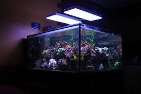 orphek reef aquarium led for sps