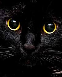 black cats with gold eyes. Unique Gold Kitty Karma When A Black Cat Chooses YOU Now What WITCH Would Turn This  Down Her Name Is MILDRED HUBBLE With Black Cats Gold Eyes C