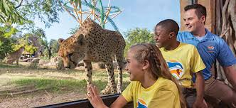 busch gardens summer camp.  Busch Busch Gardens Tampa Bay Day Camps Throughout Summer Camp D