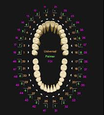 Standard Dental Chart Tooth Numbering Systems In Dentistry News Dentagama