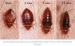 exterminator bronx ny. Contemporary Bronx Kill Your Bed Bugs Today  Fast Service 347 5274660 With Exterminator Bronx Ny A