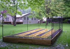 this garden has two great deters raised beds and tall fencing serious gardening