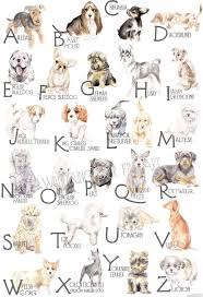 dog breeds alphabetical. Modren Breeds ABC Dog Breed Alphabet Poster From Lauren Rogoff With Breeds Alphabetical G