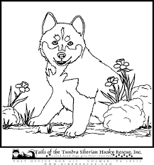 Small Picture Free Coloring Pages Of E Pup Husky Dog Coloring Pages Husky Dog