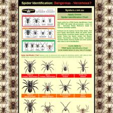Spiders Com Au At Wi Spider Identification Chart