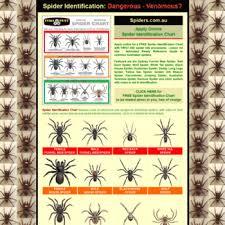 Spider Identification Chart Australia Spiders Com Au At Wi Spider Identification Chart