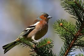 Znalezione obrazy dla zapytania ptaki w lesie