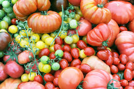How Would A Tomato Look Under Blue Light In Refrigerators Tomatoes Lose Flavor At The Genetic Level
