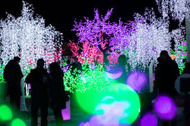 Winter Festival Of Lights Toronto 10 Things You Should Know About The Aurora Winter Festival