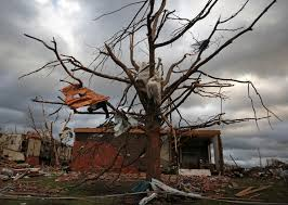 once stately trees tell a tale of destruction in joplin