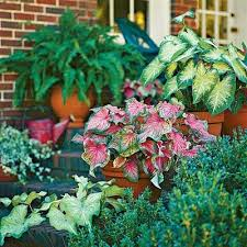 Container Gardens For Shade  Home Outdoor DecorationContainer Garden Shade Plants