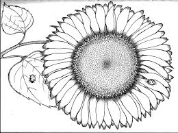 Small Picture Sunflower Coloring Pages Coloring Page