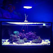 Prime Hd Light Im Fusion Lagoon 25 Light Upgrade To Prime Hd Reef2reef
