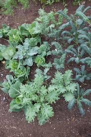 Kitchen Garden Blog No Dig Gardening Nodighome