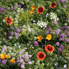 beneficial bug wildflower seed mix