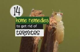 natural termite killer.  Natural With Natural Termite Killer O