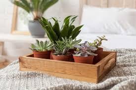 Pflanzen Im Schlafzimmer Vorteile Nachteile Und Geeignete Arten