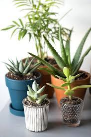 office indoor plants. Wonderful Charming Office Indoor Plants