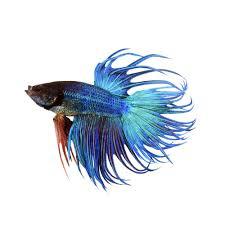 petco betta fish. Perfect Petco On Petco Betta Fish