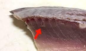 アニサキス 焼き魚