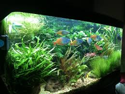 fish tank lighting ideas. Fish Tank Lighting Ideas 61 Planted 2 Years Pinterest