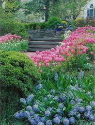 Small Picture questions how to plant and care for summer bulbs sunset daring