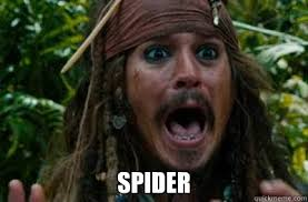 Image result for scared of spider