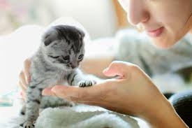Image result for alone with a cat in her home