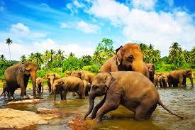 Питомник Pinnawala Elephant Orphanage