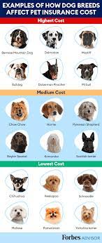 Average annual costs of dog insurance in the uk by policy type 2020. Most Expensive Dog Breeds For Pet Insurance Forbes Advisor