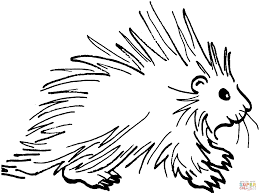 Small Picture Porcupines coloring pages Free Coloring Pages