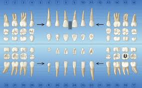 Charting Special Conditions Dentrix Magazine