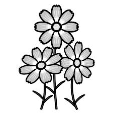 かわいいコスモスの無料イラスト商用フリー オイデ43