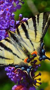 Spring, purple flowers, butterfly ...