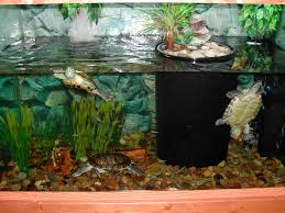 Turtle Tank Decor Turtles Raising 5 Kids With Disabilities And Remaining Sane Blog