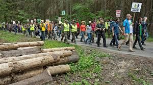 European Court Backs Opponents Of Logging In Primeval Polish Forest